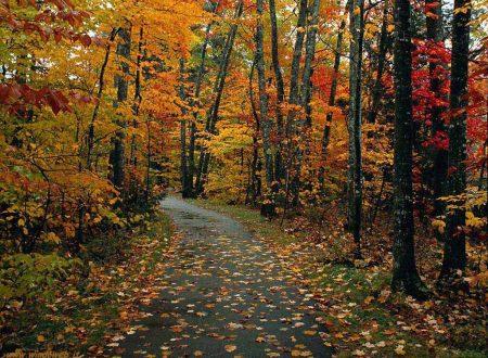 L'Eterno cammina egli stesso davanti a te