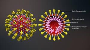La piaga del coronavirus